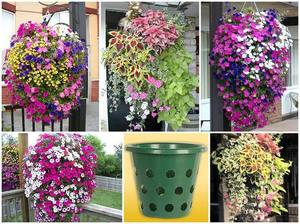 Цветы для подвесных кашпо на даче