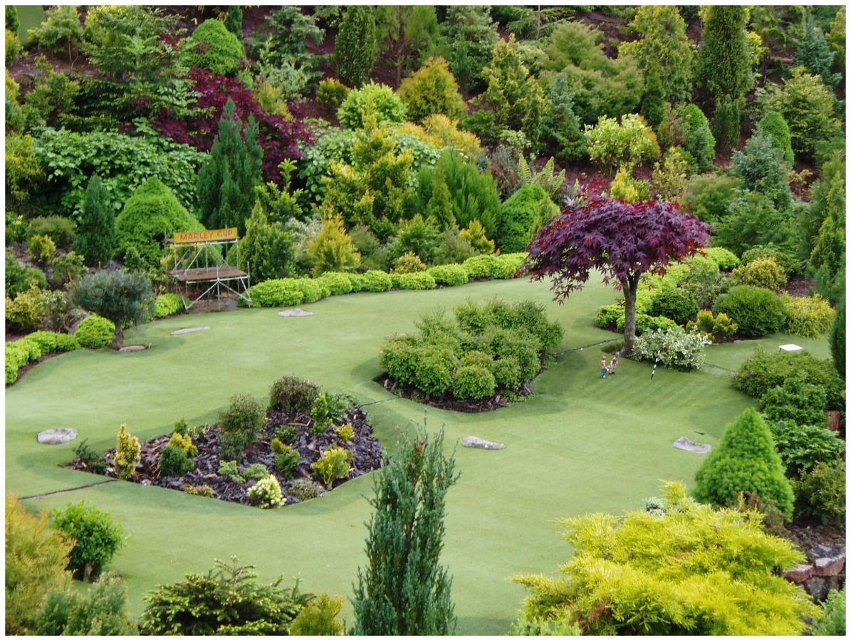 Озеленение участка своими руками из доступных растений и кустарников фото