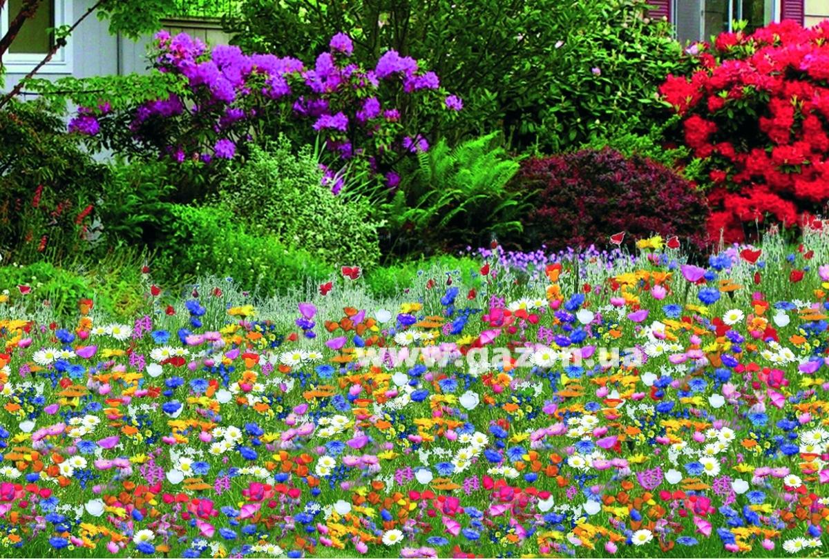 Цветы в газонной траве в фото