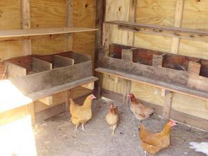 Как построить гнездо для кур