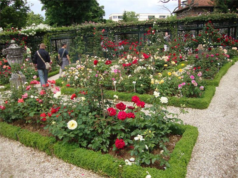 клумбы с розами на даче фото