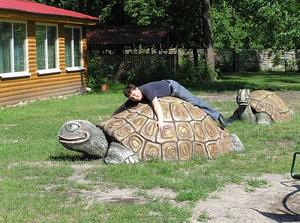 Черепаха из бетона для площадки