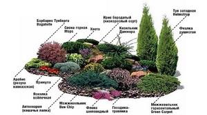 Перечень наиболее подходящих растений для альпийских горок