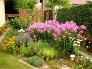 Цветы для ленивых на даче