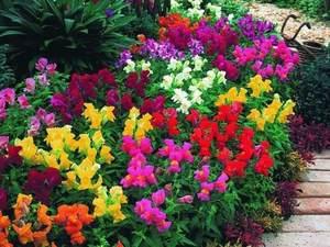 Как посадить цветы на даче