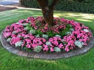Оформление цветника возле дома