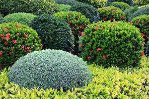 Многолетние кустарники