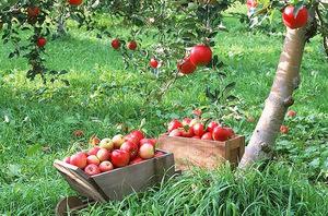 Планировка сада позволит получить хороший урожай