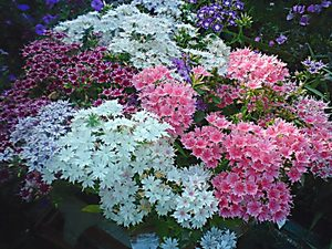 Поделки из шин - Поделки для сада, огорода - Каталог 37
