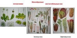 Аквариумные мхи: 17 видов с фото и описанием, содержание
