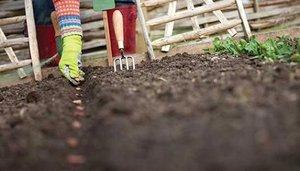 какие семена можно садить под зиму