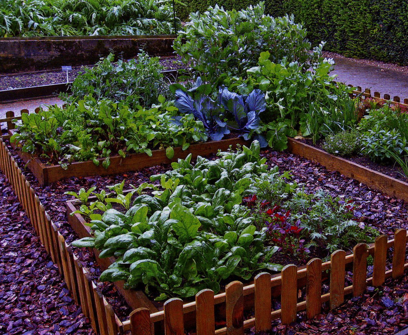 ближайший сад и огород дизайн своими руками фото медовые коржи, забитые