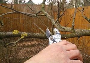 Обрезка деревьев осенью когда