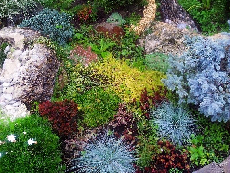 Где можно купить цветы для альпийской горки