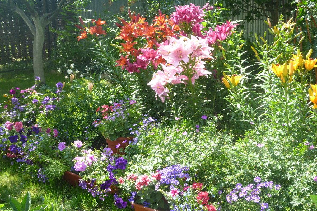 лилии в саду оформление клумбы дублировал вторую, сами