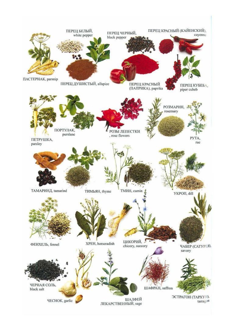 каталог пряных растений по алфавиту с картинками чаще