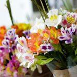 https://www.installitdirect.com/wp-content/uploads/2018/07/alstroemeria-flower-1024x683.jpg