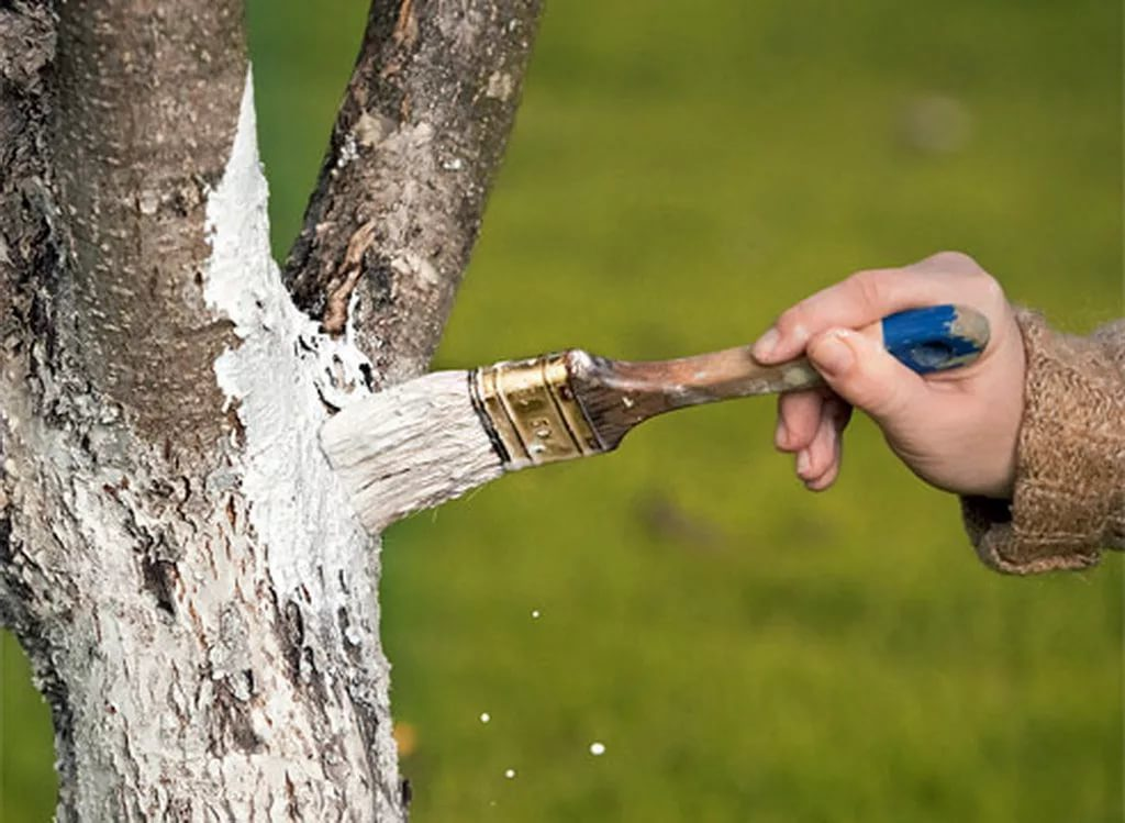 смесь для побелки деревьев