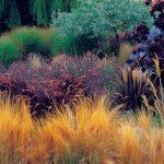 Декоративные травы и злаки: фото, список растений, описание