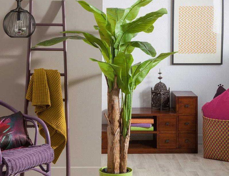 Как вырастить дома банан