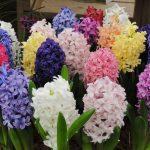Весенние первоцветы 🌼 фото, названия, описание 2019
