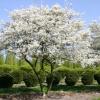Ягода ирга: фото дерева, описание, виды, правила посадки и ухода