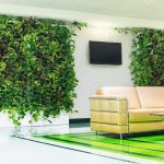 Вьющиеся комнатные растения: список, фото, описание, сравнение