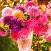 Цветы астры: фото, сорта, сравнение, высадка и уход
