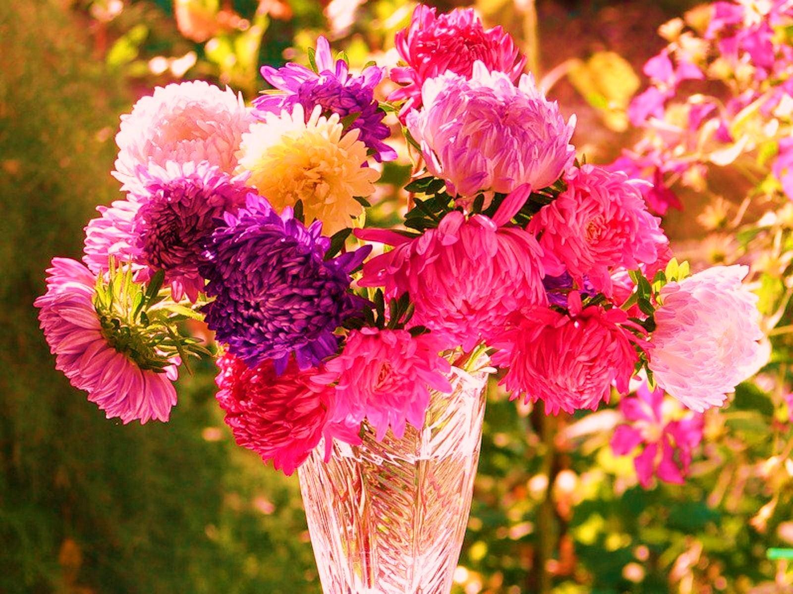 Астры букеты, доставка цветов сургут