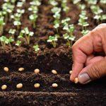 Огород в июле: сбор урожая, что сеять, полив и защита