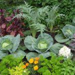 Огород, который ухаживает сам за собой: фото, как работает