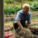 Умный огород Замяткина: фото, история, обустройство и уход