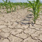 Глобальное потепление и продукты питания: история и изменения