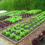Дачные растения, которые не требуют ухода: список и описание
