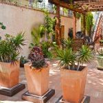 Растения для террасы на даче: фото, список, как выбрать