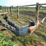 Будни садовода: уход за растениями, огород, отдых