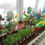 Огород на подоконнике: растения, условия, уход, полив