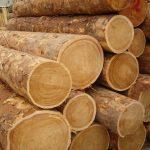 Заготовка древесины: фото, подготовка, сезон, обработка, условия