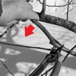 Обрезка плодовых деревьев: фото, инструкция, особенности