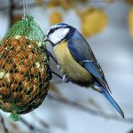Птичьи кормушки: фото, идеи, причины, польза, корм