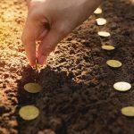 Овощная экономика: покупка, выращивание, сравнение, стоимость