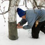 Подготовка сада к зиме: ошибки, посадка, обрезка, побелка