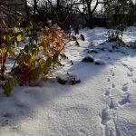 Дача зимой: работы, подготовка, укрытие растений, очистка