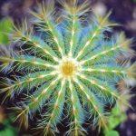 Нетребовательные растения: названия, фото, описание, особенности