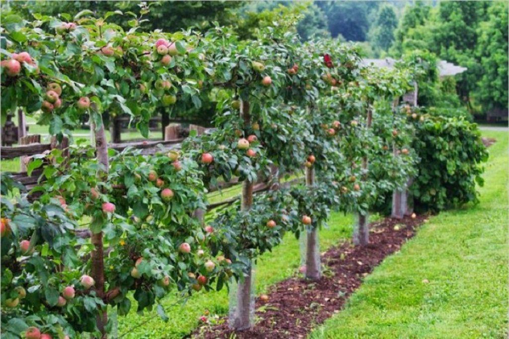 как правильно посадить фруктовый сад фото основном