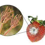 Болезни почвы: грибы, паразиты, причины появления, что делать
