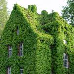 Вертикальное озеленение: фото, примеры, преимущества, особенности